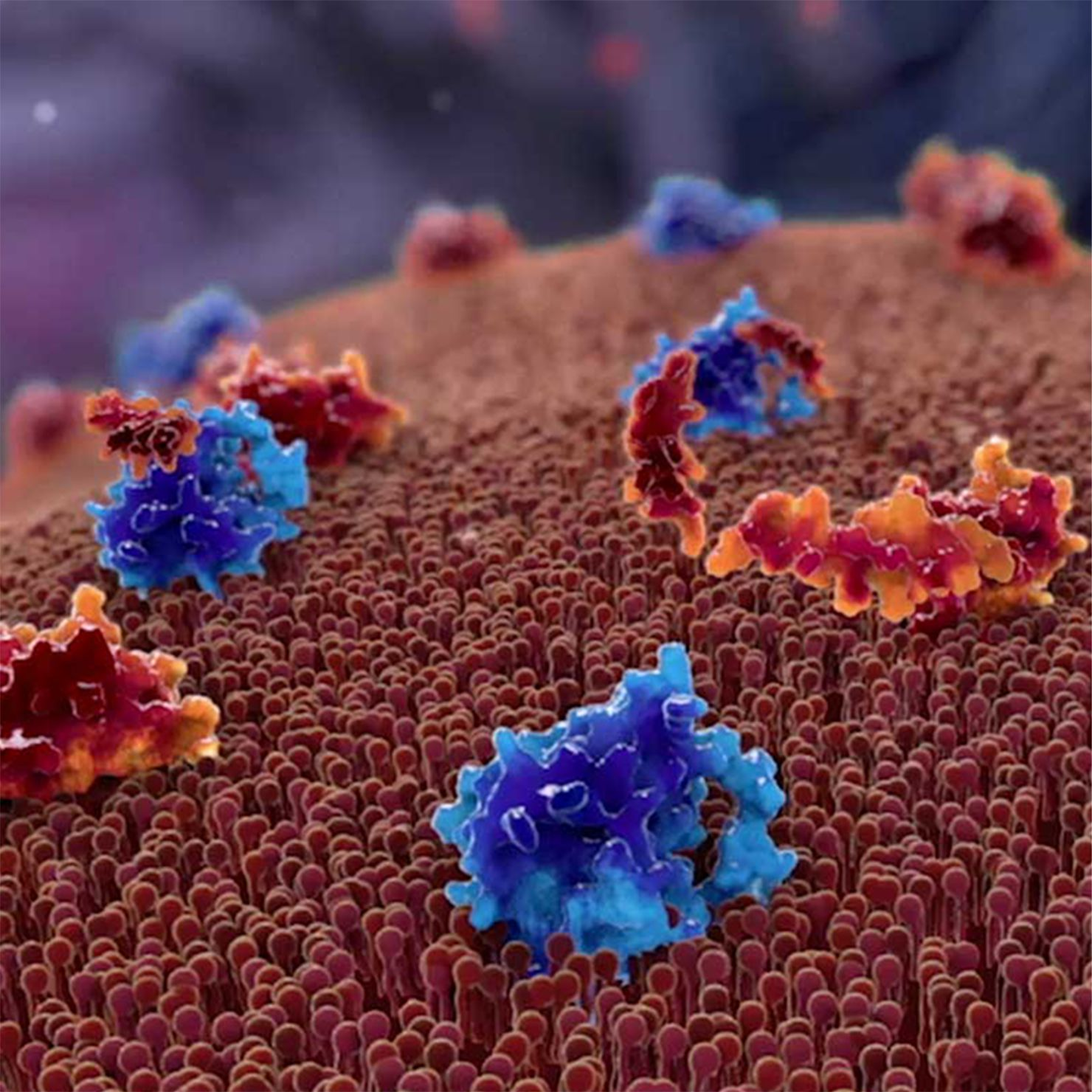 Orange and blue cells close up.
